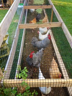 Garden chicken run- place over a bed needing weeding and turning. Hens do the work and add a bit of fertilizer too.