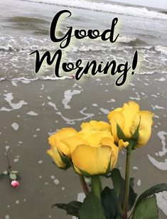 Morning Wish, Good Morning Quotes, Flower, Good Morning, Flowers