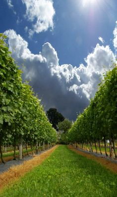 Jenkyn Place vineyards Mendoza, English Wine, Wine Vineyards, Wine Quotes, In Vino Veritas, Cloudy Day, English Countryside, Wine Making, Wine Cellar