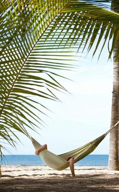 Hammock tied to the palm trees