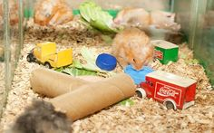How to Build Hamster Toys out of Household Items - wikiHow
