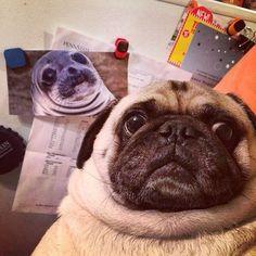 I think I may be a seal... Identity crisis