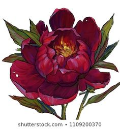 burgundy peony, garden flower, peony illustration, a blooming peony, a branch with a pion Peony Flower Tattoos, Flower Art, Flower Images, Flower Pictures, Red Flowers, Colorful Flowers, Peony Illustration, Digital Illustration, Beautiful Flowers Pictures