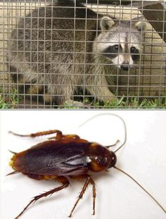 Bed Bug   pest control   Pinterest   Beds, Bed bugs and Commercial