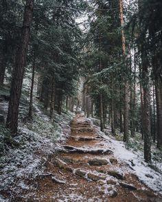 A path that Eupheme and Leland love to hike.