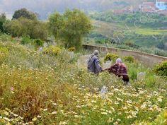 Dans le cimetière de Béni Saf, Algérie | Isabelle Morand