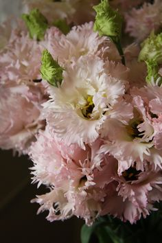 eustoma Beppin-San   WOW! This is incredible