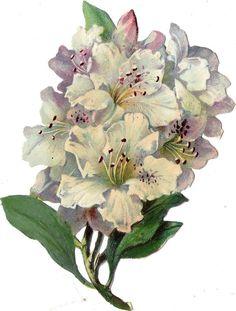 Oblaten Glanzbild scrap die cut chromo Blume flower  12,5 cm Blüte blossom