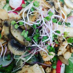 Sla lalala lalala  Lekkere salade met gebakken kipreepjes en champignons! (aangevuld met walnoten radijsjes en komkommer)