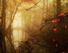 And Then Autumn Came by *Nelleke on deviantART