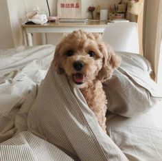 Fantastic cute dogs tips are offered on our web pages. Take a look and you wont be sorry you did. Cute Baby Animals, Animals And Pets, Funny Animals, Cute Dogs And Puppies, I Love Dogs, Doggies, Dalmatian Puppies, Silly Dogs, Adorable Puppies