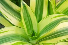 There are many benefits of having house plants but it can be hard to know which varieties are suitable. Here are the 10 best indoor plants to have in your house. Best Indoor Plants, Spider Plants, Plants Online, Real Plants, Better Homes And Gardens, Creative Decor, Plant Care, Go Green, House Plants