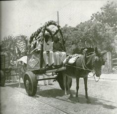 Festa do Bonfim. Carroças de burros. Decada de 40