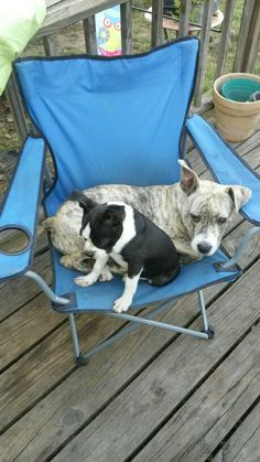 George and Daisy Mae love sleeping in this lawn chair.