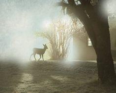 Woodland Deer Fawn Photography Fine Art by lucysnowephotography, $20.00