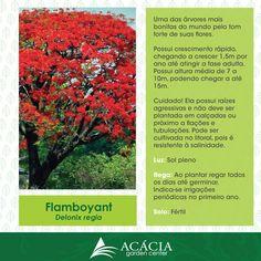 150121-Flamboyant-como-cuidar-plantas-jardinagem-paisagismo-acacia-garden-center-horto-rj-chacara-quadrado.png (846×846)
