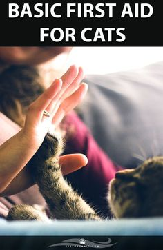 April is National High Five Day! Give someone a high five today. High Five, Cat Quotes, Animal Quotes, Animal Rights Quotes, Coaching Personal, Bodies, Emotional Support Animal, Stop Animal Cruelty, Cat Behavior