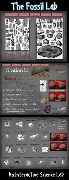 The Fossil Lab is a 119 page hyperlinked PDF document that guides students through the investigation of 33 important index fossils.  The activity navigates like a website allowing students to direct their own learning.