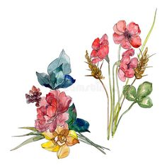 Wildflower bouquet floral botanical flowers. Watercolor background set. Isolated wildflower illustration element.. Illustration about fall, meadow, plant, element, drawing - 141730441 Watercolor Drawing, Watercolor Background, Watercolor Paintings, Watercolor Ideas, Botanical Flowers, Royalty Free Photos, Flower Pots, Wild Flowers, Drawing Fashion