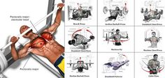 A Sample Chest Workout Routine   Fitness Workouts & Exercises