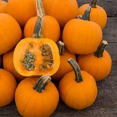Organic Non-GMO Pie-Pita F1 Hulless Pumpkin