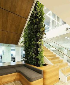 Looking for a Green-wall or Vertical garden in your space?  Contact PlantFinderPro to connect you to a professional.  https://plantfinderpro.com/contact/