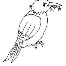 Common Kingfisher online coloring - Coloring page - ANIMAL coloring pages - BIRD coloring pages - COMMON KINGFISHER coloring pages