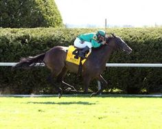 Ball Dancing(2011)(Filly) Exchange Rate- Ball Gown By Silver Hawk. 3x4 To Northern Dancer, 5x3 To Nijinsky II, 5x5 To Nearco. 14 Starts 4 Wins 3 Seconds. $731,831. Won 1 1/16M Jenny Wiley S(G1T), 1 1/8M Sands Point S(G2T), 1 3/8M Prix De La Seine S(Fr-L), 2nd 1 1/8M Queen Elizabeth Challenge Cup(G1T), 1 1/2M Prix De Royaumont(Fr-3), 1 1/8M Hillsborough S(G3T).