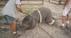 Petition · Remove the elephants from the circus · Change.org
