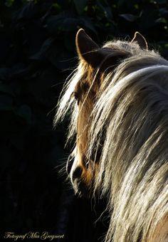 From any angle, I love horses.