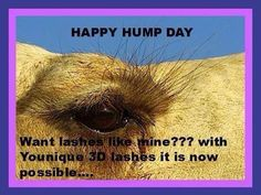 What day is it.. HUMP.. day..no.. it is LASH DAY.. www.youniqueproducts.com/kizewinter