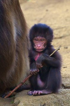 Baby Gelada Baboon | Flickr - Photo Sharing!