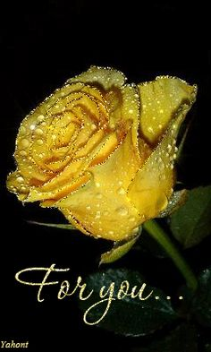 A pretty yellow rose for you Beautiful Flowers Wallpapers, Beautiful Rose Flowers, Beautiful Gif, Pretty Flowers, Purple Flowers, Beautiful Pictures, Exotic Flowers, Roses Gif, Flowers Gif