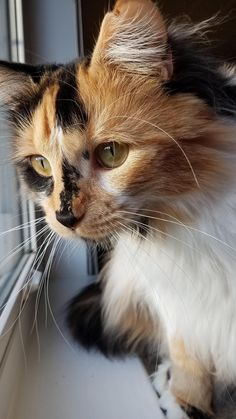 My pretty girl Layla. by jesskerz cats kitten catsonweb cute adorable funny sleepy animals nature kitty cutie ca
