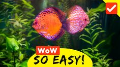 Removes Excess With Traditional Methods Selfless Gravel Cleaner For Fish Tanks Fish & Aquariums