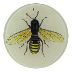 John Derian Company Inc — Bee 3