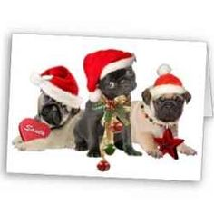 Pug Christmas Card - pugs and Christmas can it get cuter? #pugs #dogs #christmas #cards