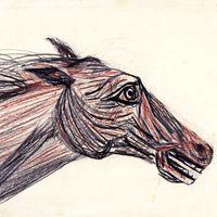 1955 . Cabeça de Cavalo