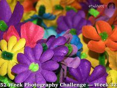 52 Week Photography Challenge — Week 32 Landscape: Colorful   #52WeekPhotographyChallenge #dogwood52 #dogwoodweek32 #photography #IntrospectivePics #debw07 #color #flowers