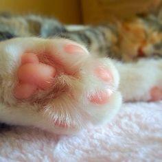 16_paws_