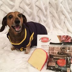 Surpawrise!🎉😂 it's a Pizza 🍕 pawty for my buddy Dr.Pepper  @dr_pepper_thewiener I got all the ingredients and I'm coming over 🧀🍕🥓 #DrPeppersPizzaParty let's roll the dough and eat all day 🍕🍕😂😂😂 I even got pawperronis 😂😂🍕 🍕 🍕 Follow my Pawtnahs: @yogi_doxie @lovely.timon @pennypooh_cartwright @alii_the_mini_doxie @micahlongdoggy @porky_thechiweenie @bobmarley_dachshund @black.m0nd4y @stefybau76 @the_doxieboys @the_real_mr.sausage @sweet_licks_greta @giuseppe.the.doxie…