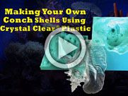 Crystal Clear® Conch Sea Shell: 2-Part Mold with Mold Star® 15 Silicone Rubber