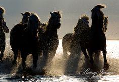 Dark Horses II - Fine Art Horse Photograph. $225.00, via Etsy.