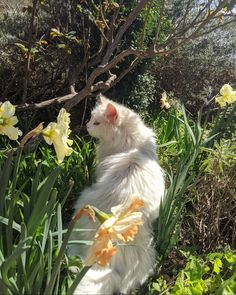 Cute Little Animals, Baby Animals, Funny Animals, Des Fleurs Pour Algernon, I Love Cats, Cute Cats, Cat Aesthetic, Nature Aesthetic, Cute Creatures