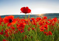 "Did you know that there are only 89 companies in all of Canada that are official ""Imagine"" Caring Companies? In order to qualify, a company must have a strong presence in their community and donate 1% of profits to nonprofit organizations. Tundra Process Solutions Ltd. is one of those 89 companies, and we'd like to invite you this Remembrance Day to join us in supporting our local community and Canadian nonprofits. Give flowers to a veteran you know or donate your time to helping a…"