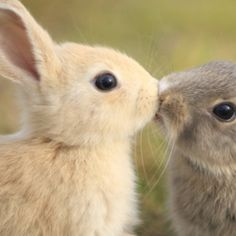 Bunny smoochies!   : )