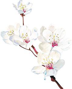 Sakura watercolor painting style - image samples