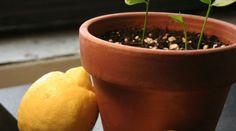 grow-an-1074x483