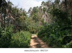 The old road to Bokor Hill Station, Kampot, Cambodia Stock Photo