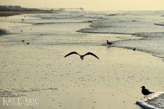 Victory for Animals of the Atlantic! Atlantic Ocean - Photo: Kim Clune